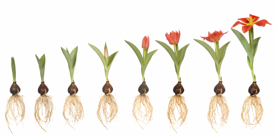 Are You Sowing the Seeds of Success?  