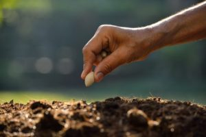 35552684 - farmer hand planting a seed in soil